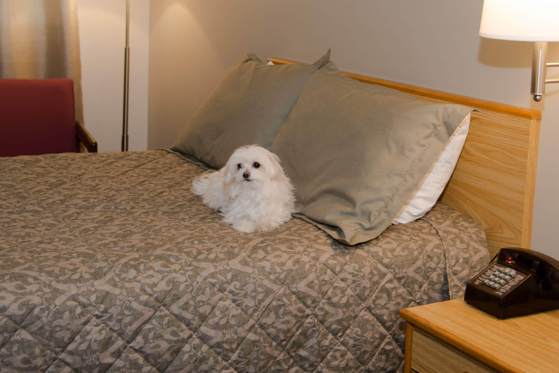 Room with small, white fluffy dog o bed with green bedding.