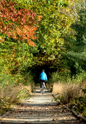 Fall leaves in shades of orange, red and brown surrounding a woman on a bike, cycling down a dirt path.