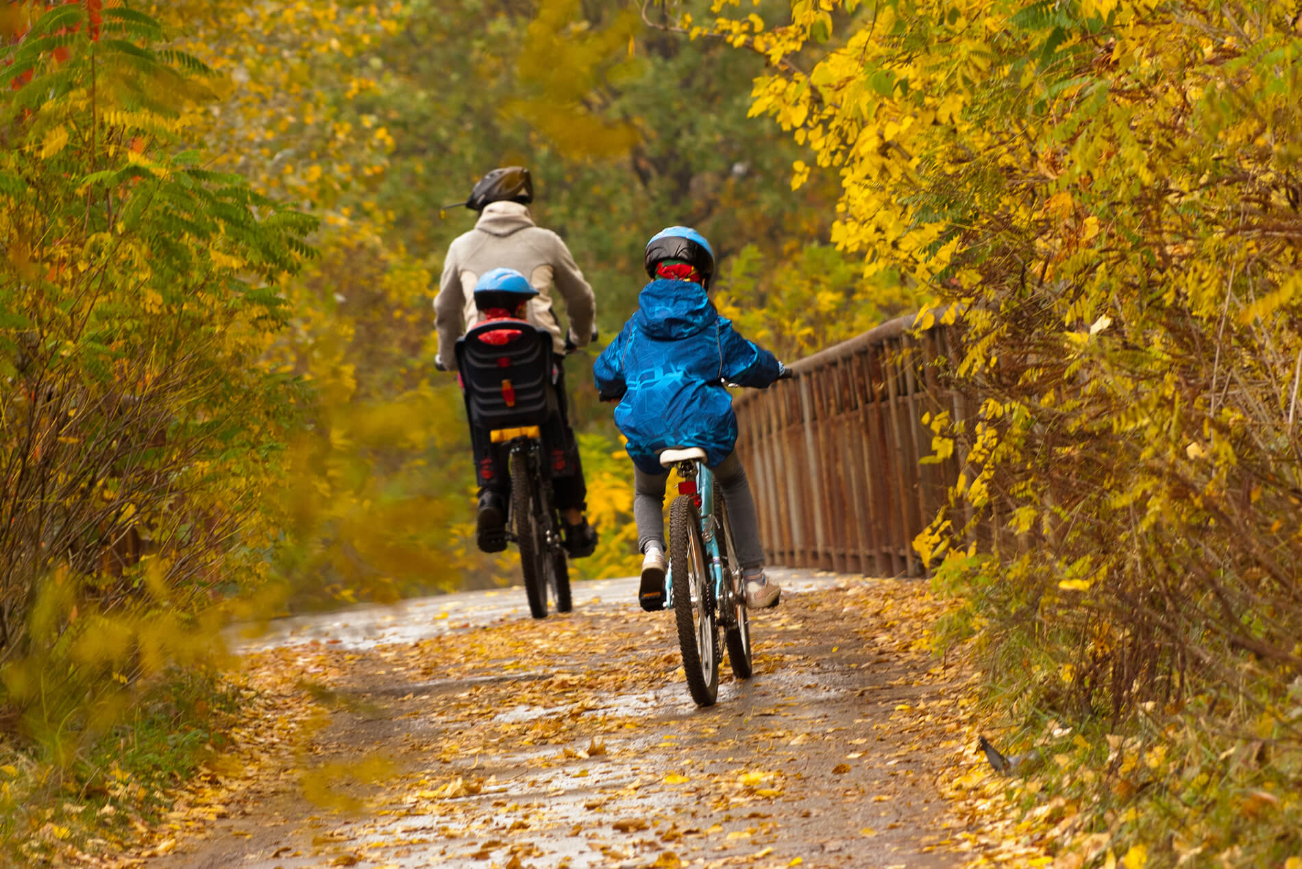 dad and children on bikes, cycling outdoors, yellow and gold autumn fall colors.